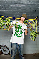 Ryan Biesterfeld (cq) defoliates marijuana plants at a Good Meds Network grow house in Denver, Colorado, Tuesday, December 3, 2013. <br /> <br /> Photo by Matt Nager