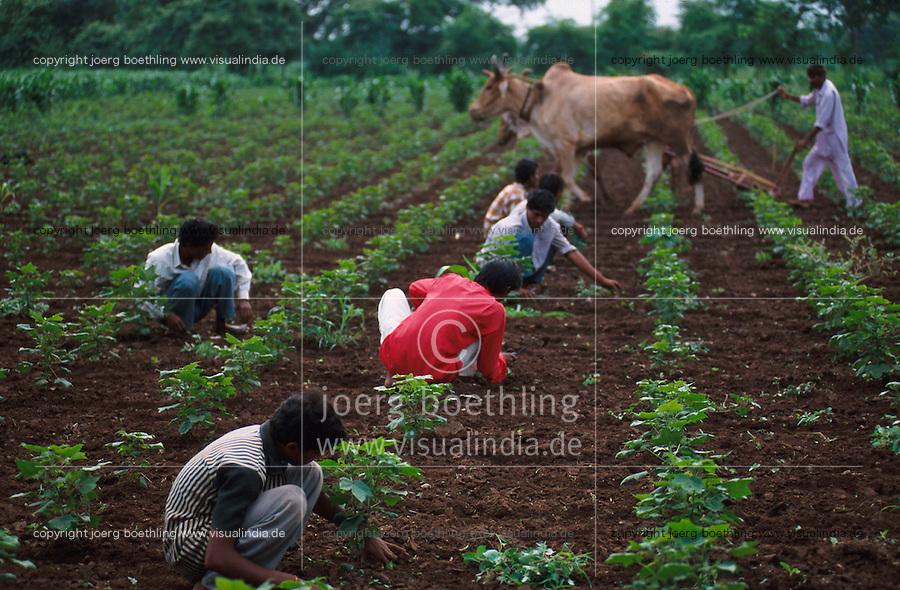 INDIA Kasrawad, Maikaal organic cotton project, weeding in cotton field / INDIEN Maikaal Biobaumwolle Projekt, Unkraut jaeten im Baumwollfeld