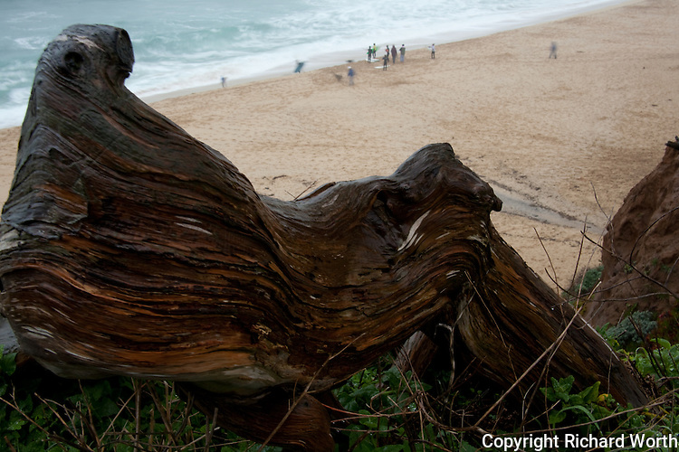 From the vantage point of the parking area high above Montara State Beach this gnarled log provides close perspective compared to the surfers and other beach visitors below.