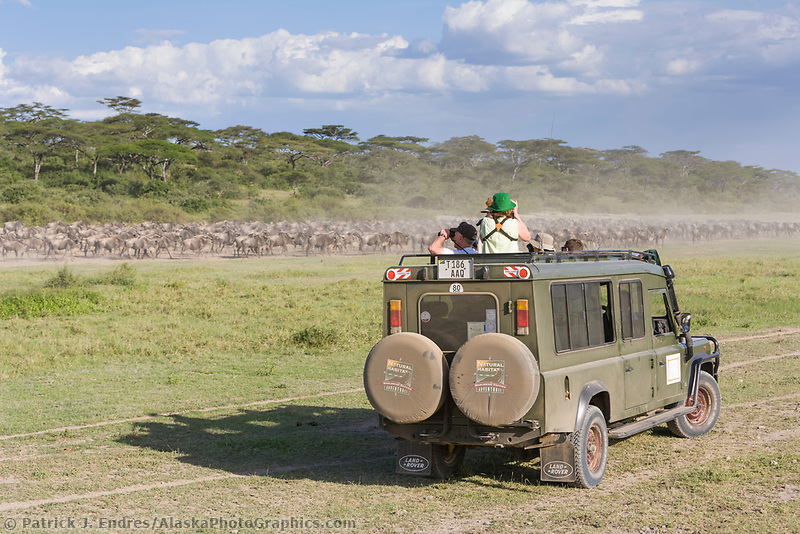 Tourists photograph and watch a herd of wildebeest from a  land cruiser in the Serengeti National Park, Tanzania, East Africa