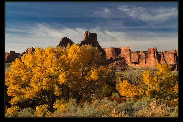 Courthouse Wash and cottonwood trees in fall color, Arches National Park, UT.<br />