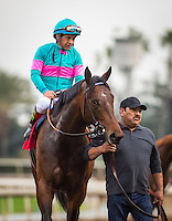 ARCADIA, CA - FEBRUARY 04: Royal Moe #1, ridden by Victor Espinoza is uncontested in the Robert B. Lewis Memorial Stakes at Santa Anita Park on February 4, 2017 in Arcadia, California. (Photo by Zoe Metz/Eclipse Sportswire/Getty Images)