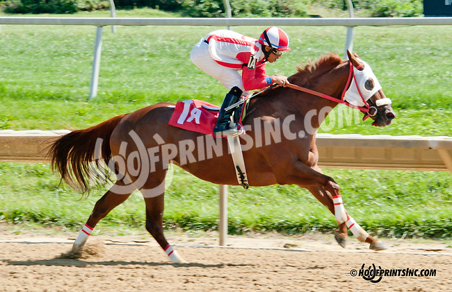 Gold On Gold winning at Delaware Park on 9/23/13