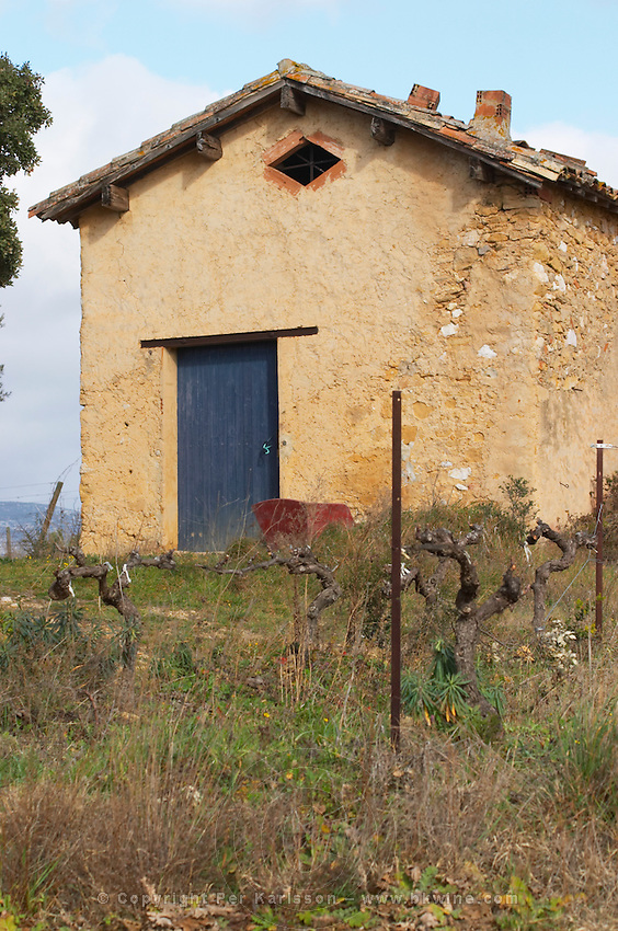 Domaine Alain Chabanon, previously Font Caude, in the Lagamas village. Montpeyroux. Languedoc. A tool shed hut in the vineyard. France. Europe. Vineyard.