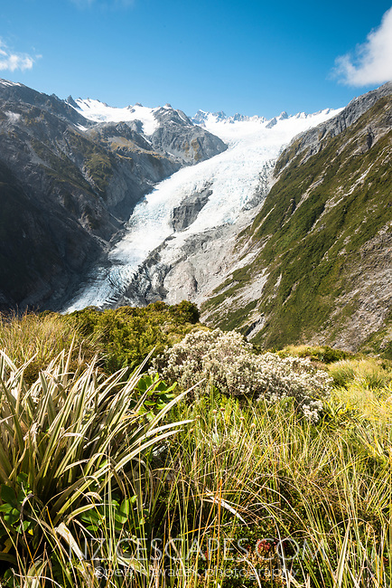 Franz Josef Glacier, Westland Tai Poutini National Park, West Coast, World Heritage Area, New Zealand