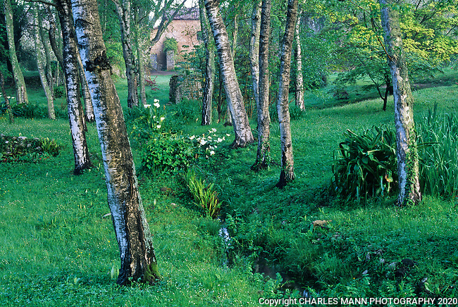 A serene copse of trees divided by an irrigaton ditch lined with white Calla Lilies creates a peaceful spring vignette at the Ninfa gardens in central Italy near Rome