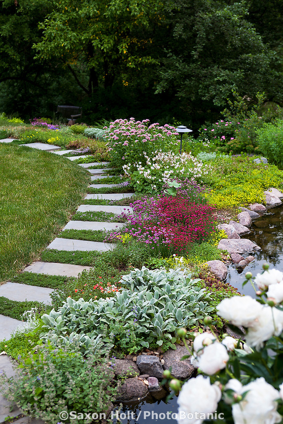 Stepping stone path through succulent sedum groudcovers by pond at edge of woodland garden