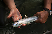 150620-JRE-7981E-0802 A dime-bright Dolly Varden char from the upper Kenai River.