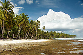 INDONESIA, Mentawai Islands, palm trees with island against cloudy sky