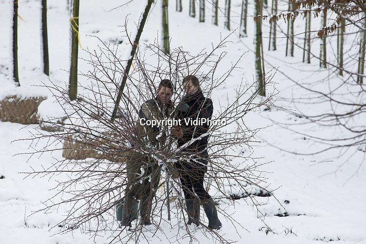 Foto: VidiPhoto<br /> <br /> RANDWIJK – Ruth Verwoert en zijn vriendin Anneke Geurtsen verrichten vrijdag samen een koud kunstje in de sneeuw. Voor Boomkwekerij 't Hoorn uit Opheusden moeten ze op een perceel in het Betuwse Randwijk in de sneeuw een tiental koningslinden rooien, opbinden en transporteren naar een handelaar in Opheusden. De bestelling is voor een klant in het buitenland. Koud, maar ook schoon werk, vindt Ruth. Dankzij sneeuw en lichte nachtvorst hoeft er niet gewerkt te worden op de modderige boompercelen langs de Rijndijk . ZZP'er Verwoert verhuurt zichzelf aan met name boomkwekers voor diverse werkzaamheden nu de sector weer flink in de lift zit en er werk genoeg is. Ook in de winter.