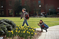 Student taking photo of daffodils near McCool Hall.<br />