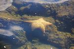 Sea Star, Haitises National Park