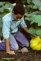 1R14-008z  Eastern Box Turtle - being watched by boy in garden near pumpkins - Terrapene carolina