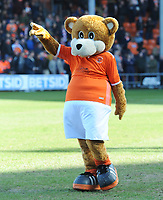 Blackpool mascot Bloomfield Bear<br /> <br /> Photographer Kevin Barnes/CameraSport<br /> <br /> The EFL Sky Bet League One - Blackpool v Southend United - Saturday 9th March 2019 - Bloomfield Road - Blackpool<br /> <br /> World Copyright © 2019 CameraSport. All rights reserved. 43 Linden Ave. Countesthorpe. Leicester. England. LE8 5PG - Tel: +44 (0) 116 277 4147 - admin@camerasport.com - www.camerasport.com