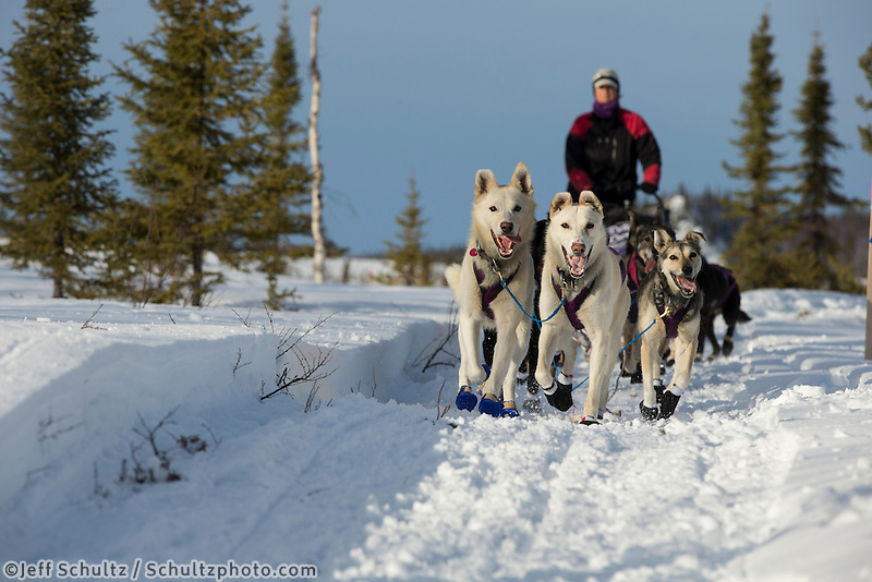 Jessie Royer 's lead dog Ranger and Streak lead her on the trail into the halfway checkpoint of Iditarod on Thursday March 7, 2013...Iditarod Sled Dog Race 2013..Photo by Jeff Schultz copyright 2013 DO NOT REPRODUCE WITHOUT PERMISSION