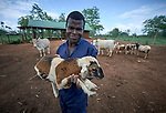 A man holds a sheep on a church-sponsored farm in Riimenze, South Sudan. The farm is run by Solidarity with South Sudan and provides food for students at a teacher training college, residents of a Congolese refugee camp, and displaced South Sudanese who live in a camp for internally displaced persons that formed around the Our Lady of Assumption Catholic Church in Riimenze.