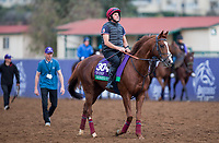 DEL MAR, CA - NOVEMBER 02: Decorated Knight, owned by Saleh al Homaizi & Imad Al Sagar and trained by Roger Charlton, exercises in preparation for Breeders' Cup Mile at Del Mar Thoroughbred Club on November 2, 2017 in Del Mar, California. (Photo by Kazushi Ishida/Eclipse Sportswire/Breeders Cup)