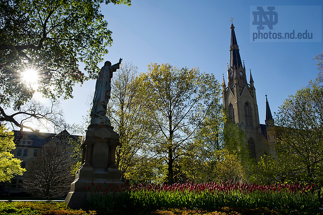 """April 11, 2012;  Sacred Heart Jesus statue and tulips in Main """"God"""" Quad. Photo by Barbara Johnston/University of Notre Dame"""