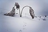 Niegowa 01.2010 Poland<br /> All trees bend under the weight of snow and ice.<br /> Three atmospheric forces: rain, snow and frost have changed into an ecological disaster the Myszkowski district in the Czestochowskie province, located 230 kilometers south of Warsaw. Almost 95% of all trees are down.Thousands of homes are left without electricity.<br /> Photo: Adam Lach / Napo Images for Newsweek Polska<br /> <br /> Wszystkie drzewa uginaja sie pod ciezarem sniegu i lodu.<br /> Wstepnie &quot;tylko&quot; 95% scietych drzew w dwoch powiatach. 0.5 miliona metrow szesciennych zniszczonych lasow..Tysiace gospodarstw bez pradu. Wszyscy maja swiadomosc, ze na kumulacje trzech niekorzystnych .zjawisk atmosferycznych rady nie ma.Trzy zjawiska kt&oacute;re zamienily jeden z obszarow Polski w istna katastrofe ekologiczna: deszcz, snieg i szadz.<br /> Fot: Adam Lach / Napo Images dla Newsweek Polska