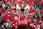 Wisconsin Badgers mascot Bucky Badger celebrates another touchdown during an NCAA college football game against the Indiana Hoosiers on November 13, 2010 at Camp Randall Stadium in Madison, Wisconsin. The Badgers won 83-20. (Photo by David Stluka)