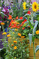 Sunflowers, calendula, veggies, nasturtium, corn, strawberries, comos, mixture of vegetable garden and flowers with raised bed container planters, annual flowers