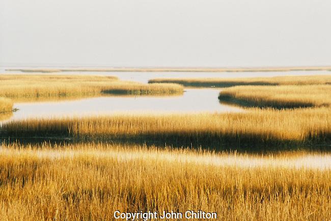 Photo of Marsh near Charleston, South Carolina