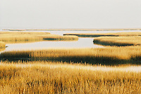 Photo of Marsh near Charleston, South Carolina