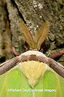 04000-002.11 Luna Moth (Actias luna) Marion Co. IL