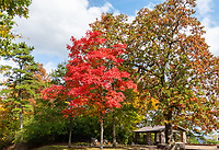 Fall Maple at Overlook - A Wonderful red Maple tree at an overlook in Hot Springs Arkansas in the National Park.  The fall colors were fantastic this year everywhere we went we found great autumn colors.