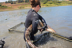 Katie Kent Moving Leopard Shark Between Pens
