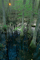 Congaree Swamp<br />