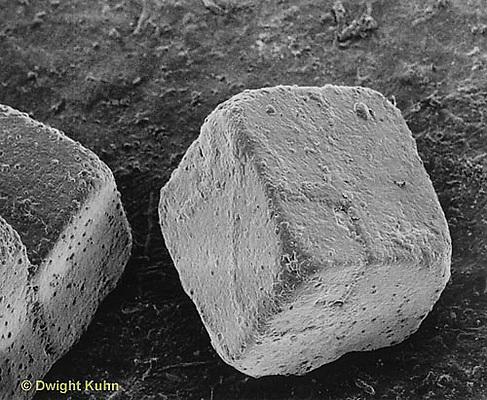 CX09-011b Salt Crystal  NaCl electron microscope view - SEM 330x [8x10].