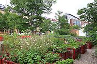 Prinzessinnengärten. Ce jardin communautaire a été installé pendant l'été 2009 sur un espace en friche depuis 25 ans a coté de Moritzplatz par le groupe des Nomades Verts. Activistes, fans, amis et voisins se sont approprié cette terre en nettoyant l'endroit, en apportant de la terre et en plantant les premiers légumes dans des caisses en plastiques./// Prinzessinnengärten.  This community garden was set up by the group the Green Nomads during the summer of 2009 in a place next to Moritzplatz that had been a wasteland for 25 years. Activists, fans, friends and neighbor appropriated this land for themselves by cleaning it up, bringing in turf and planting the first vegetables in plastic planters.