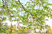 France, Indre-et-Loire (37), Amboise, la pagode de Chanteloup, arbre à souhaits