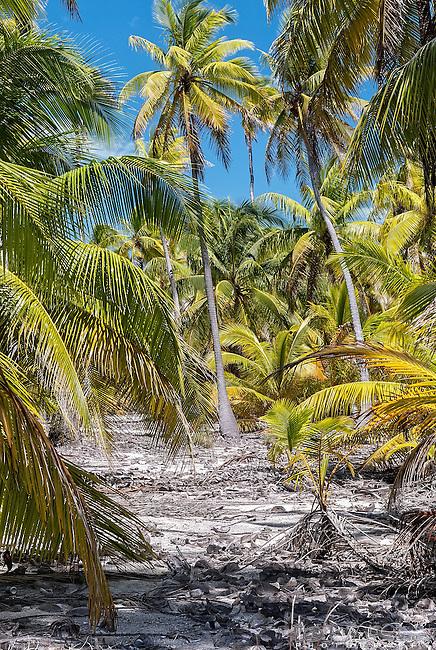 A remote tropical scene on the island of Kiritimati in Kiribati