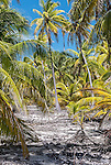 A remote tropical scene on the island of Kiritimati in Kiribati