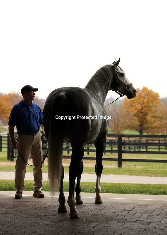 17  November  2009 Kentucky Stallions.  Rockport Harbor at Darley @ Jonabell Farm, awaits his turn to be shown to a group of breeders and fans.  Rockport Harbor will enter his 4th year at stud in 2010, while his oldest offspring of 2009 are yearlings.