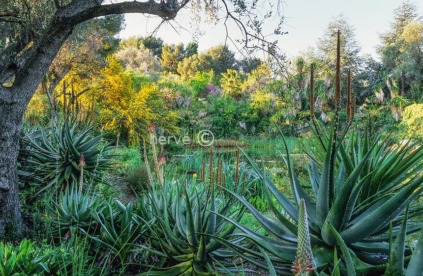 06/ Jardin botanique &quot;Les Cèdres&quot;<br /> Le &quot;lac&quot; : aloès (Aloe), mimosa à feuilles de saule (Acacia salicifolia), papyrus (Cyperus), yucca (Yucca elephantipes)