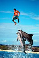 A public dolphin show with Atlantic Bottlenose Dolphin, Tursiops truncatus, Hawaii. mammal Atlantic Bottlenose Dolphin Tursiops truncatus endangered protected vertical Cetacea Odontoceti Delphinidae Flipper leap leaping trainer show public aquarium  oahu sea life
