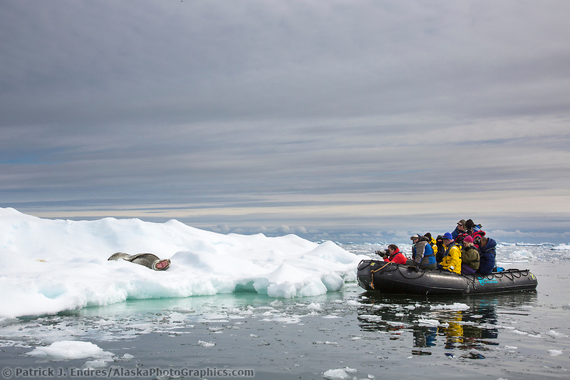Leopard seal on iceberg near Yalour Island, Antarctica