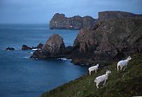 Rugged coast Tory Island North-Western Ireland