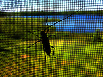 A large bug on a screen.