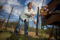 Maryann Pratt cuts the ear of a calf while calving and branding on her rural Arizona ranch. (Pat Shannahan/ The Arizona Republic)