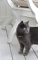The family's 'farm cat' on the veranda
