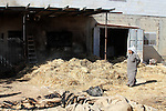 """A Palestinian man inspects his home and a sheep farm after an attacked by Israeli settlers in the village of Aqraba southern the West Bank city of Nablus, on July 2, 2014. Israeli settlers write the words """"blood vengeance"""" and """"price tag"""" in Hebrew on the outer walls of the farm. Photo by Nedal Eshtayah"""