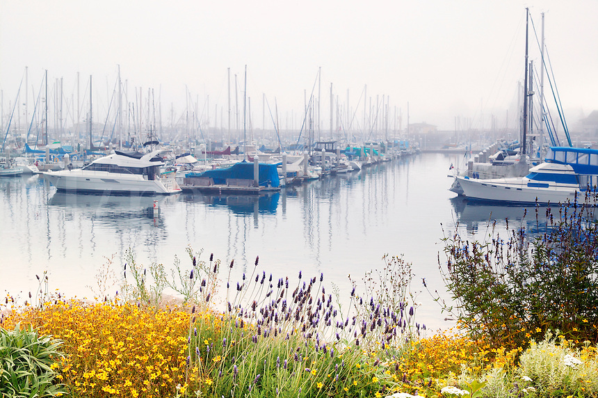 Boats in the Monterey Municipal Marina during a foggy morning, Monterey, California.
