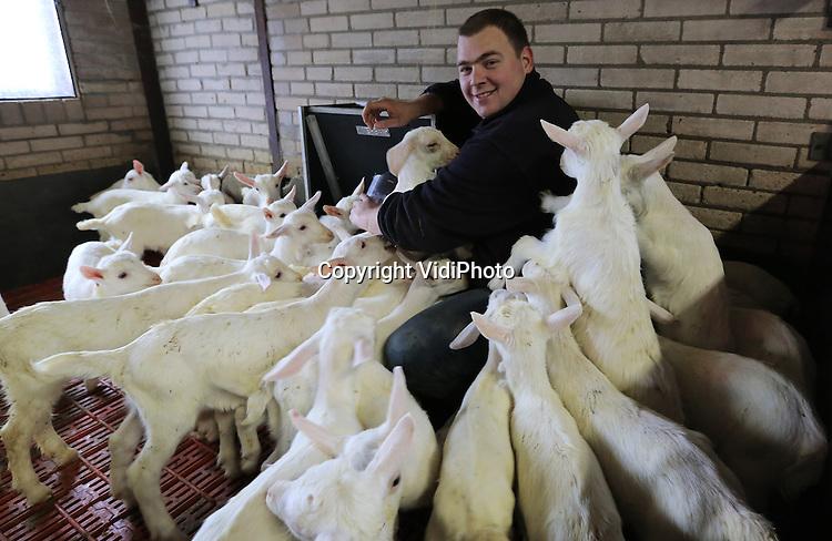 Foto: VidiPhoto<br /> <br /> HETEREN - Een invasie van jonge geitjes dinsdag in de stallen bij veehouder Erik Timmermans uit Heteren in Gelderland. En iedere dag komen er meer bij. Inmiddels staat de teller op honderd stuks, maar de verwachting is dat er zo'n 300 jonge geiten geboren zullen worden. De maatschap Timmermans heeft een gemengde veehouderij van zowel 100 melkkoeien als 500 melkgeiten. De aanwas dient als vervanging en uitbreiding van de geitenstal. De prijzen van zowel koeien- als geitenmelk zijn hoog vanwege de enorme vraag uit China. Foto: De geiten vallen onder verantwoordelijkheid van stagier Michel.