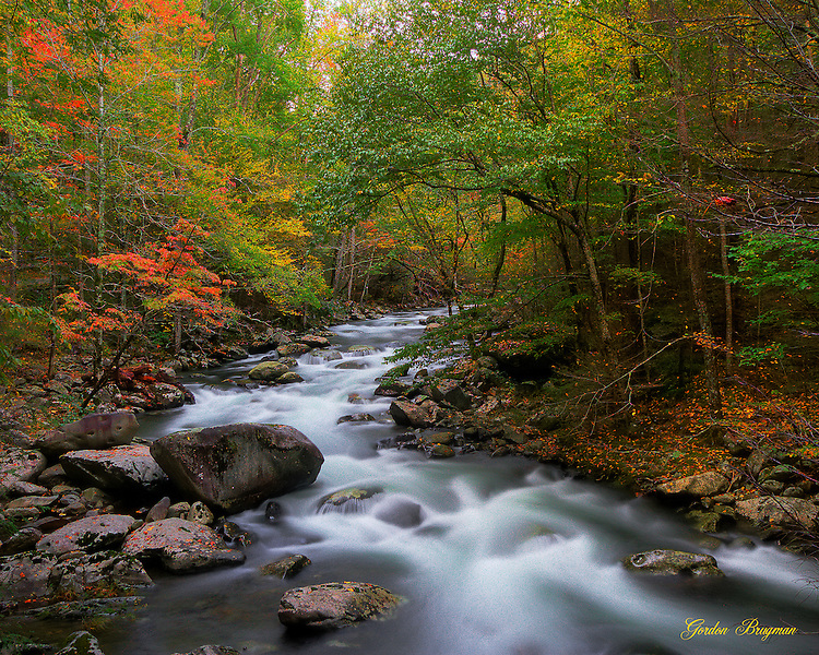 HDR image of Fall colors gracing the trees along the Little River in the Tremont section of the Great Smoky Mountains National Park. Smoky Mountain photos by Gordon and Jan Brugman.