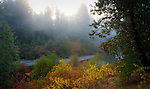 Washington, Central, Cascade Range. Autumn Fog and color along Nason Creek in the Wenatchee Forest.