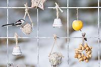Schwanzmeise, Futtergitter für Vögel, Vogelfutter-Spalier, Vogelfutter-Gitter, Selbstgemachtes Vogelfutter, Vogelfütterung, Fütterung, Fettfuttermischung, Fettfutter, Meisenknödel, Erdnusskette, Erdnüsse, Erdnusskette, Erdnussring, Erdnuß, Vogelfutterspalier, Vogelfuttergitter, Winterfütterung, Schwanz-Meise, Meise, Meisen, Aegithalos caudatus, Long-tailed tit, bird's feeding, snow, La Mésange à longue queue. Adventskalender für Vögel, Advent, Weihnachten für Vögel